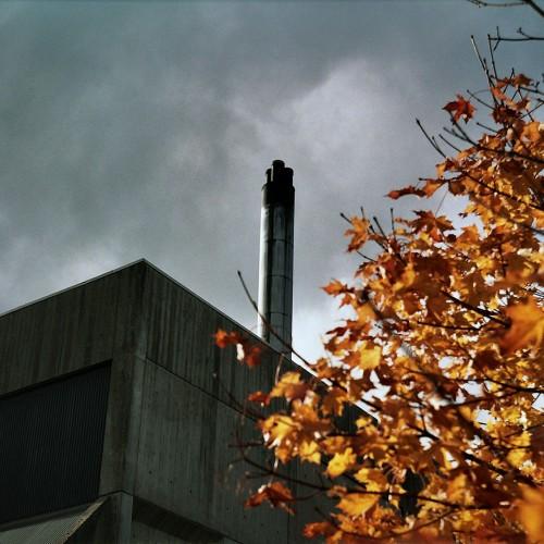 Dingleton Boilerhouse autumn leaves photo CJ Hurst